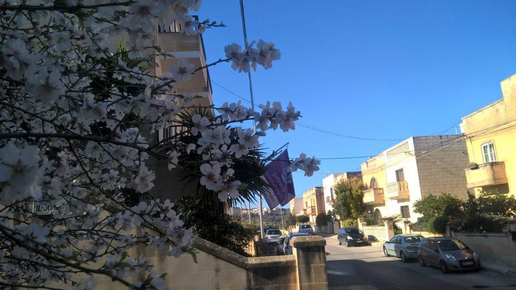 Escola de inglês internacional GSE em Malta para estudar cursos de inglês excelente localização em St Julians